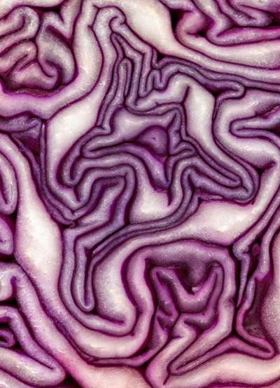 JS-Mag-Sunshine-Red-Cabbage-V2-Edit
